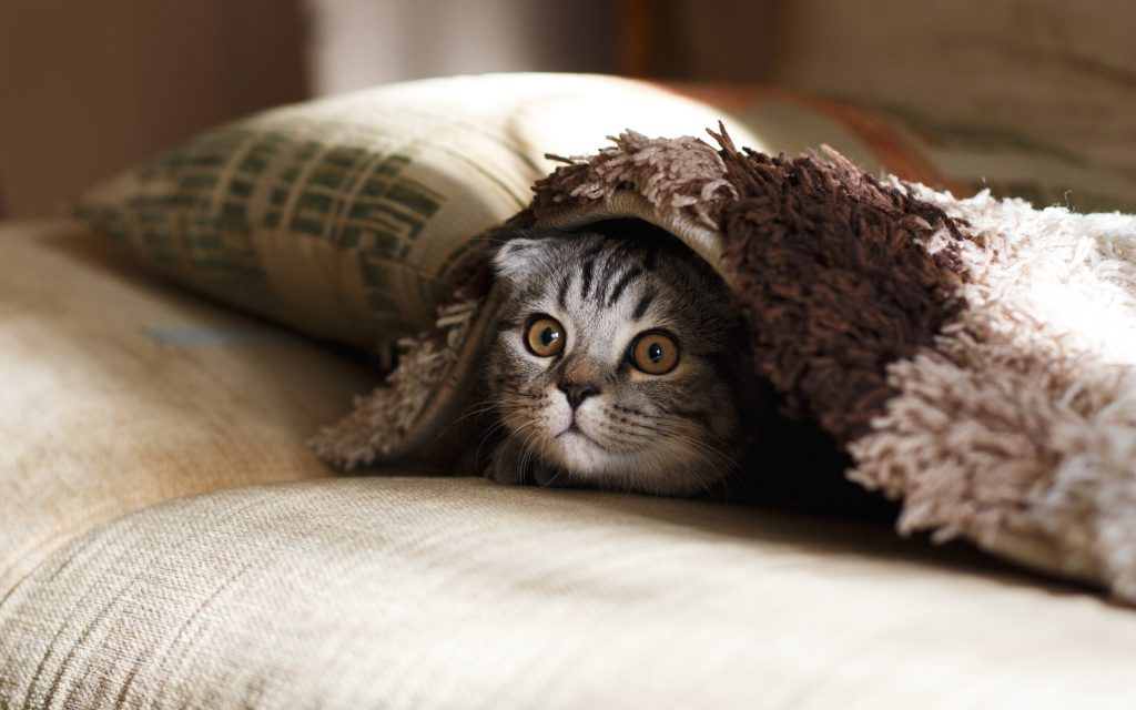 Cat hiding under blankets
