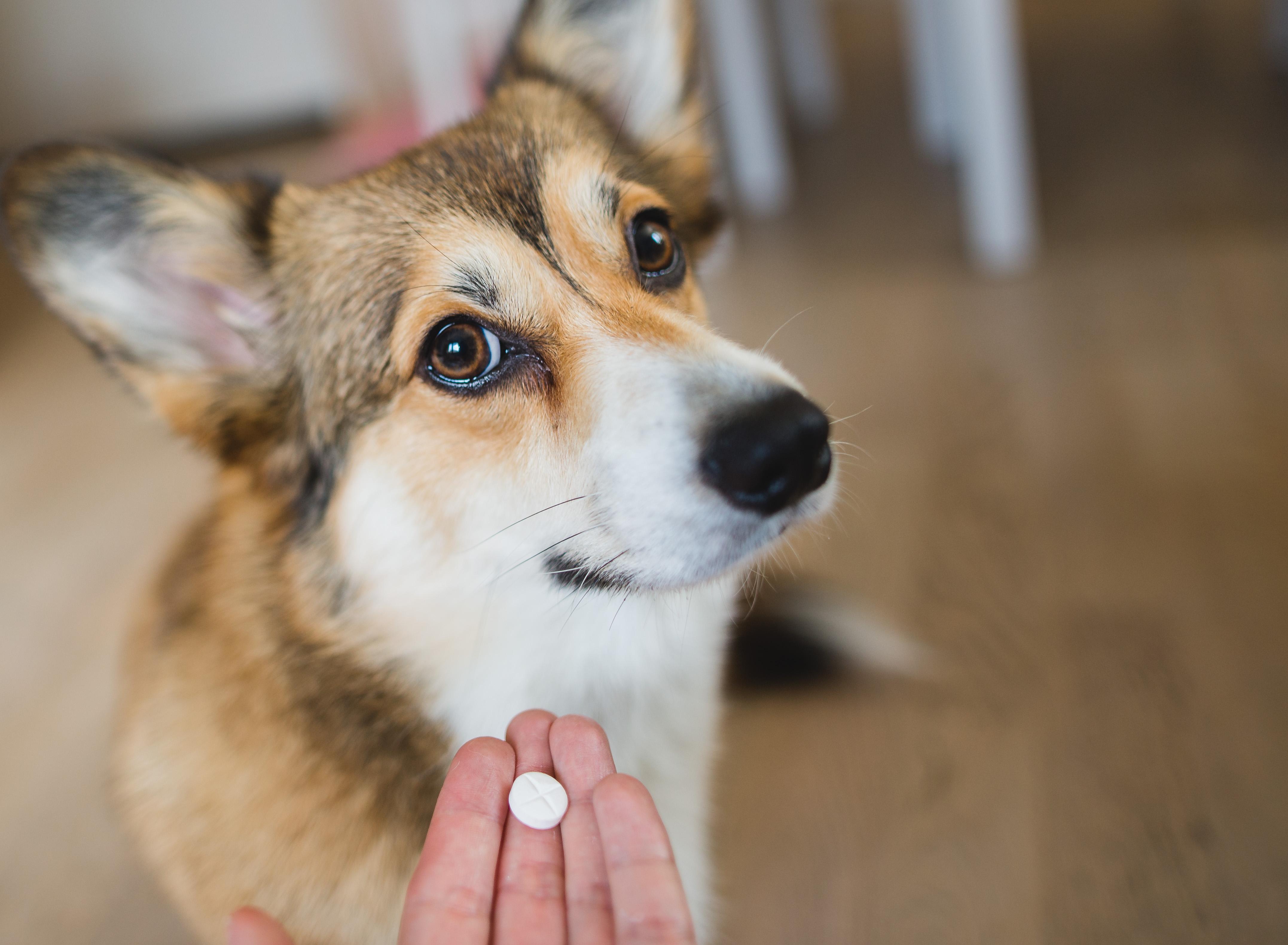 Dog and Trazodone Medication